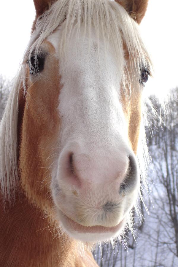 horse-1-1529761-640x960